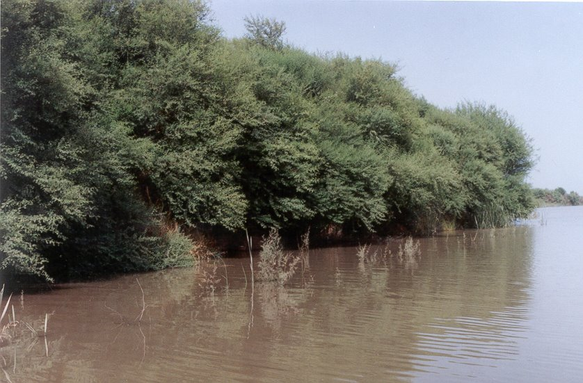 """forest types of sindh """"in punjab, there are three forest types – the pine forests of murree, the scrubs of the salt range and the riverine forests near kot addu, vehari and muzaffargarh,"""" said ibrahim khan, the ."""